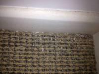How To Get Rid Of Moth Infestation In Carpet - Carpet ...