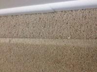 Moth Larvae Infestation In Carpet - Carpet Vidalondon