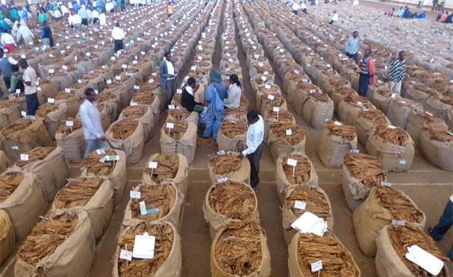 Tobacco Auction Floors to open 22 April