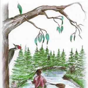 Wilderness Wildllife Vol III