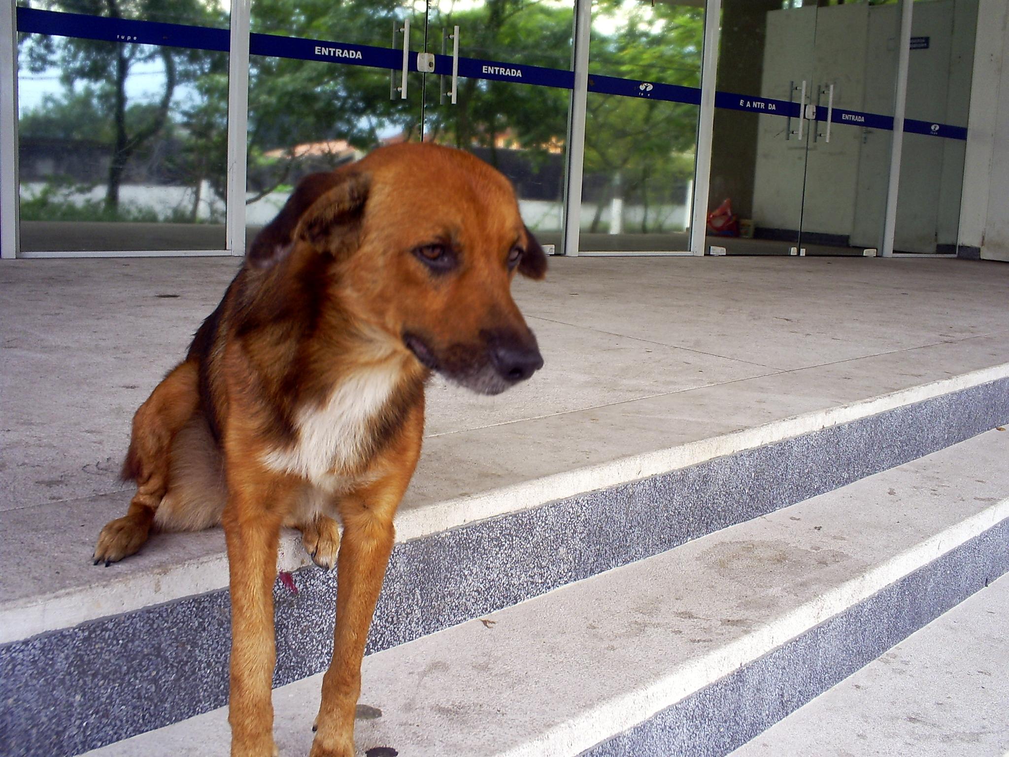 Há apenas um segurança cuidando do local, mas esta simpática cadelinha dá uma patinha, quer dizer, uma mãozinha.