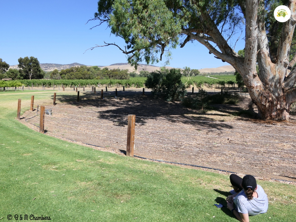 Grand Wine Estates of the Barossa Valley - Jacobs Creek