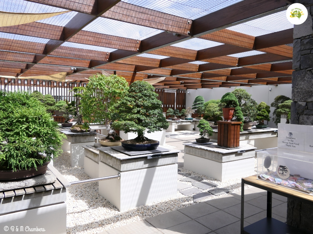National Arboretum - Bonsai Collection