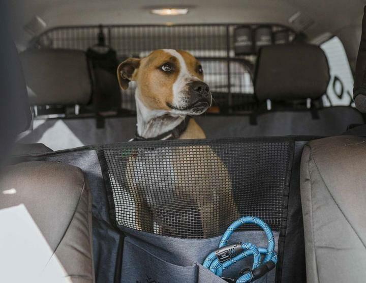 travel Australia with a dog