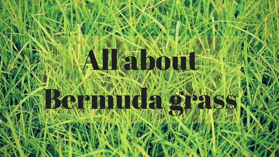 how to make st augustine grass spread quickly