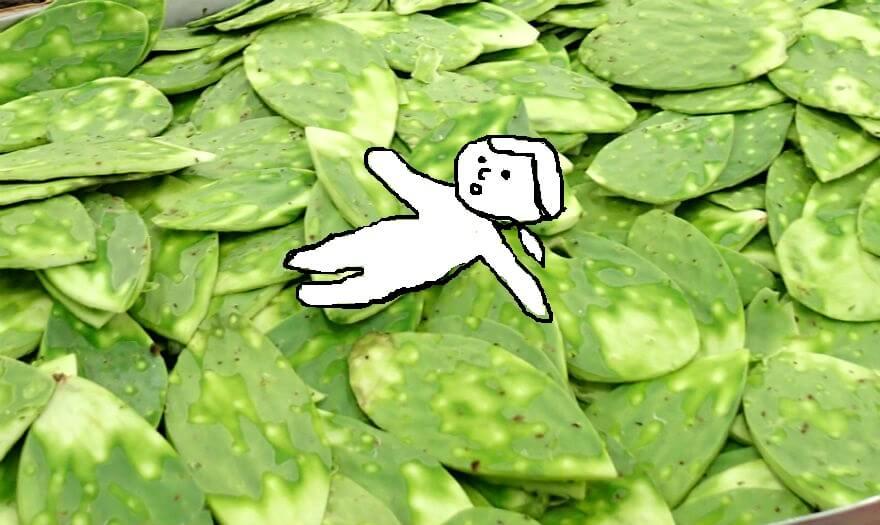 メキシコ人が愛する食用サボテン「ノパル」を食べてみよう!
