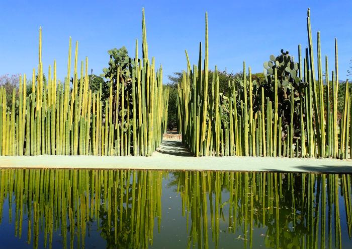 オアハカの民族植物園(サボテン)