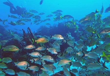 コスメル島ダイビング魚いっぱい