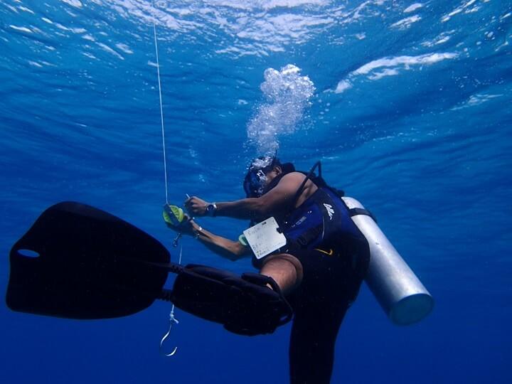 コスメル島ダイビング