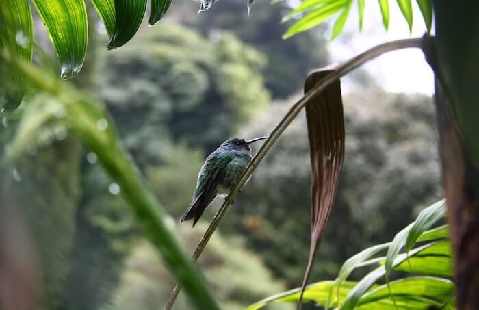 ジャングルの中のハチドリ