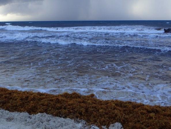 海藻まみれのカンクンのビーチ10