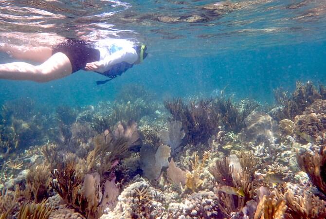カンクンの美しいサンゴ礁1