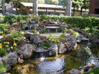 What Needs to be done to Create a Backyard Water Feature
