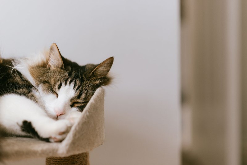 Why Cats Make The Perfect Pet - Cats Are Low Maintenance