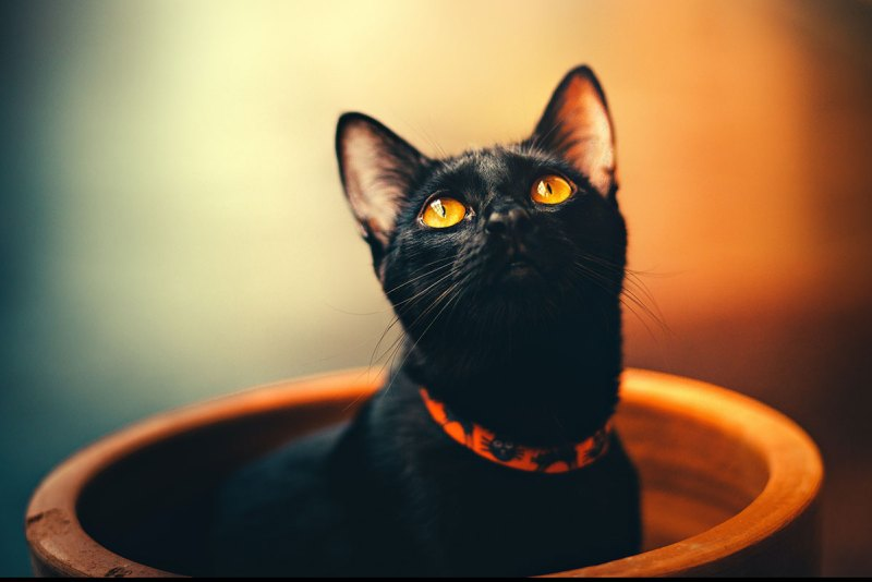 Why Cats Make The Perfect Pet - Cats Are Lucky