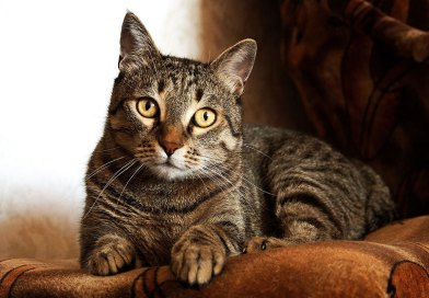 Why Cats Make The Perfect Pet