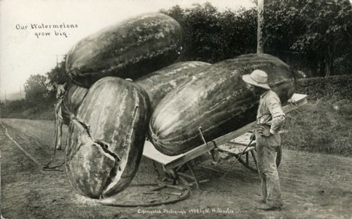 Открытки-небылицы о великой американской мечте начала XX века