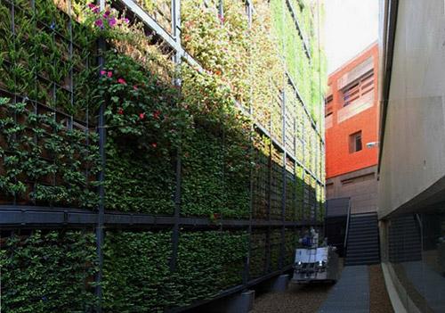 Вертикальные сады  и газоны. Озеленение ввысь как спасение городов