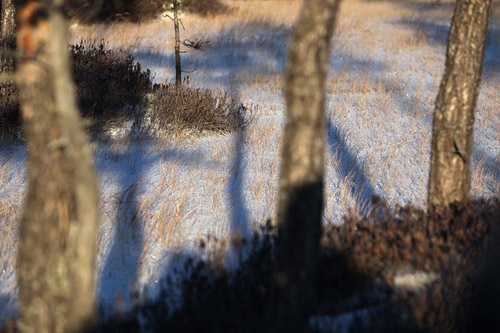 Югра - Ханты-Мансийский автономный округ. Семья, тайга, олени...