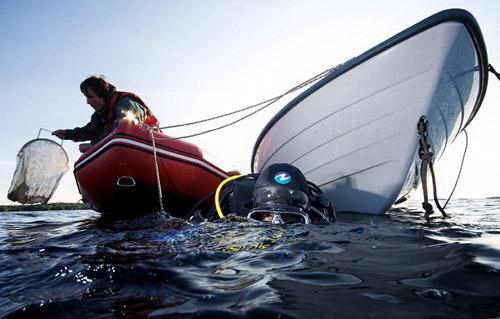 Космос Белого моря и его обитатели. Подводные эксперименты на биостанции от фотографа Александра Семенова