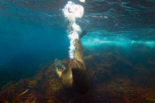 Золотая Черепаха. Крупнейшее в России фотографическое мероприятие, посвященное красоте дикой природы
