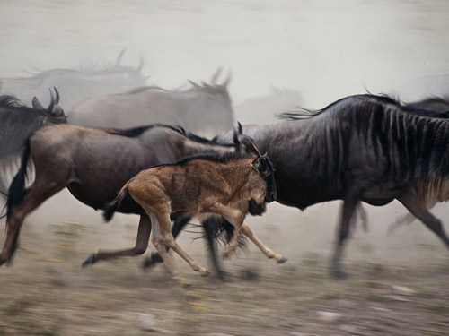 National Geographic - Photo of the Day. Архив за июль 2011