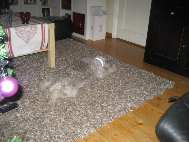 Image result for invisible dog blending in