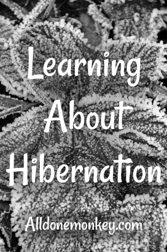 Learning About Hibernation: Resources for Kids |  Alldonemonkey.com
