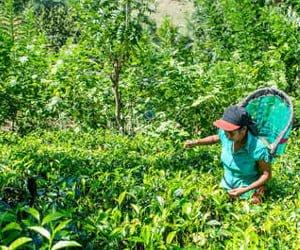 Coop-Gutscheine und Sri Lanka Reise gewinnen