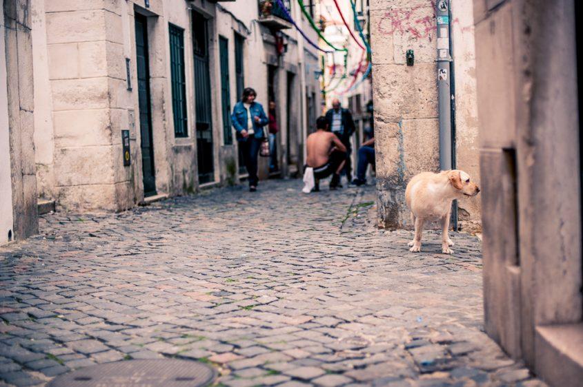 Melancholie Lissabon 1-137