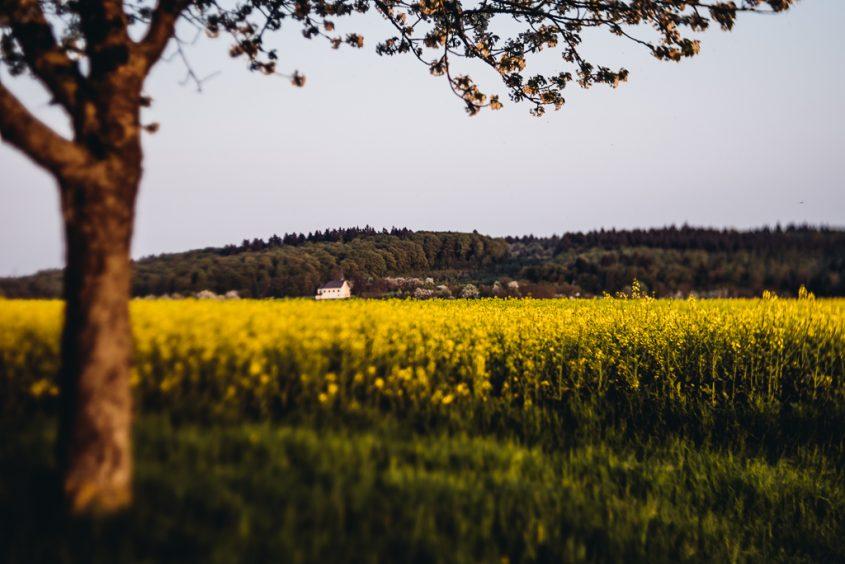 Kraichgau, Heimat, Frühling, Wärme, Abendlicht, Sonne