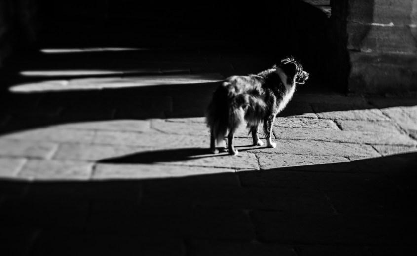Schwarzweiß, black and white, Originalität, Kontrast, Squeezerlens