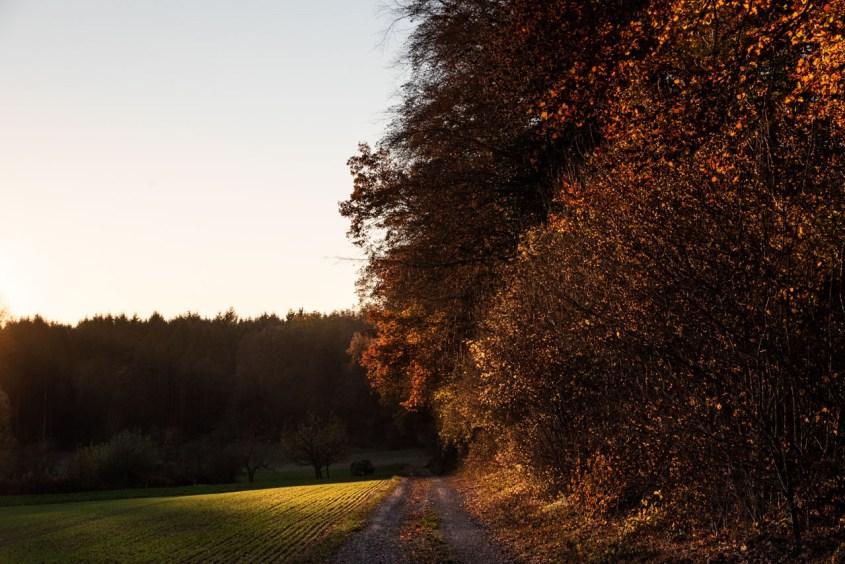 Herbst, Kraichgau, Jahreszeiten, Licht, Stimmung