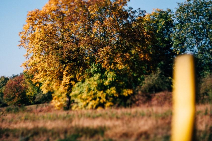 Herbst, Zeichen, Zeichen der Zeit