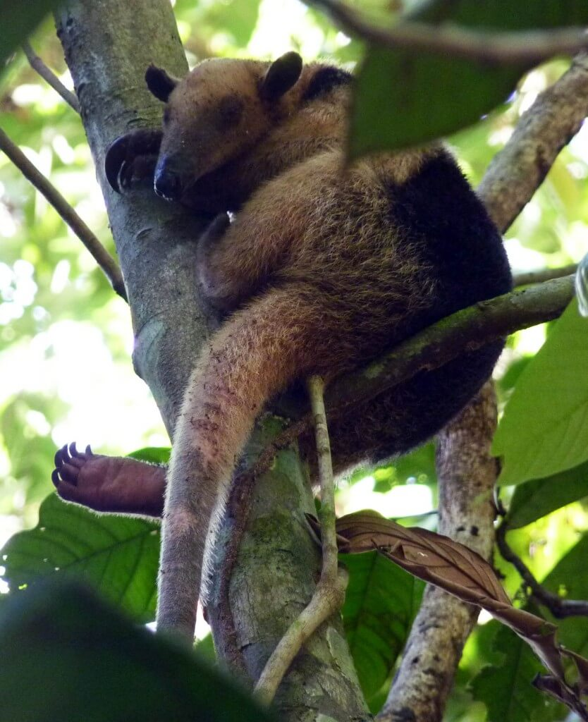 Corcovado Costa Rica