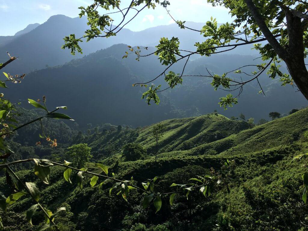 jungle colombia