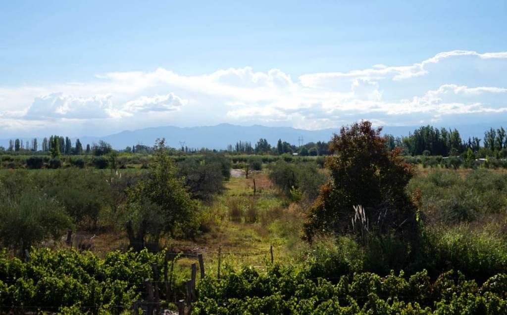 Wijntour in Mendoza