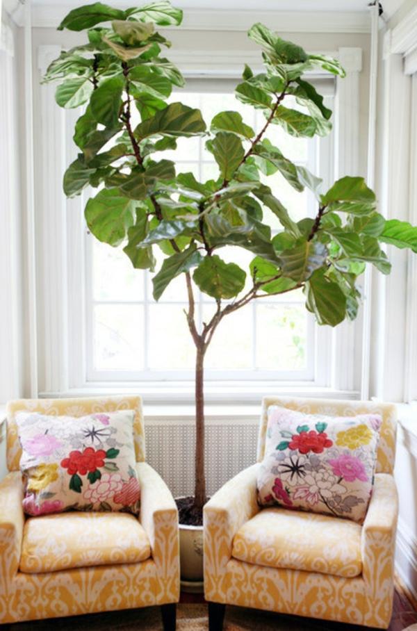 Eine Pflanze als Dekoration GeigenFeige fr eine belebte Atmosphre