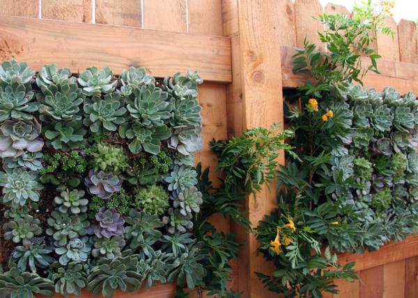 Tolle Design Pflanzen Sukkulenten Garten