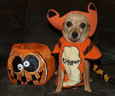 Halloween Verkleidung Ideen  coole Kostme fr die