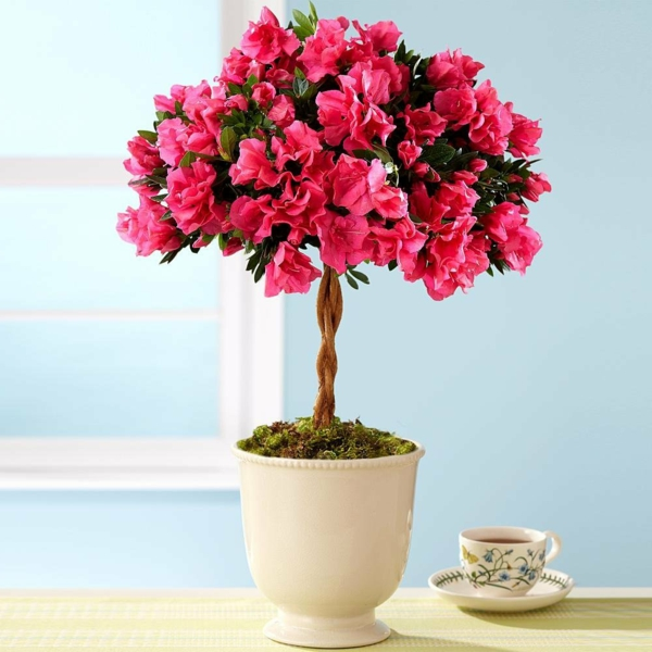 Zimmerblumen  sanfte Dekoration frs Zuhause