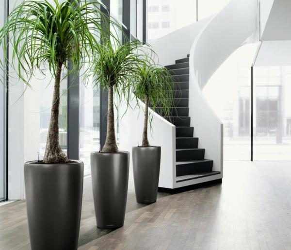 Schne Zimmerpflanzen erfllen die Rolle von Dekoration