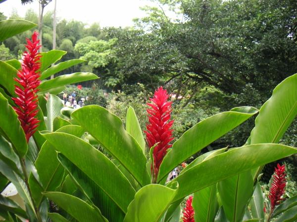 Exotische Pflanzen  die richtige Pflege fr die Alpinia