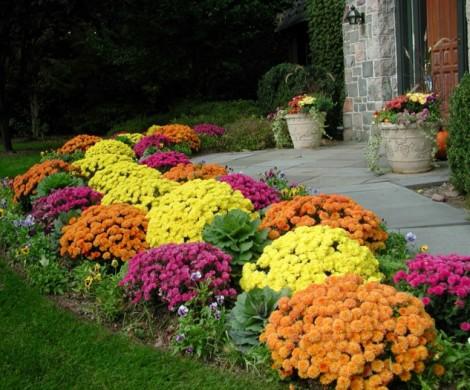 Herbstblumen fr eine farbige Gartengestaltung