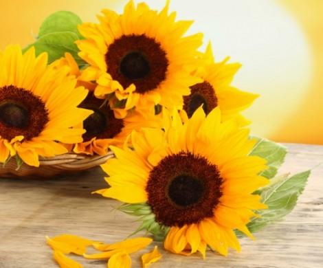 Sonnenblumen und ihr dekorativer Wert