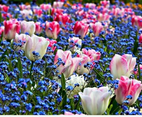 Frhlingsblumen im Garten sind eine Freude frs Auge und