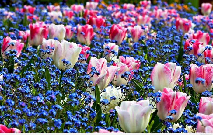 Frhlingsblumen im Garten sind eine Freude frs Auge und die Sinne
