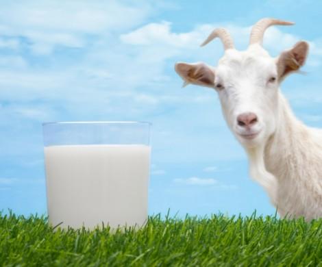 Ziegenmilch gesund  5 wissenswerte Vorteile der Ziegenmilch