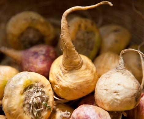 Die Maca Wurzel  das neue Superfood und ihre Wirkung