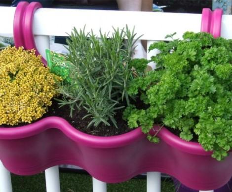 Kruter pflanzen  ein Balkon voller Duft